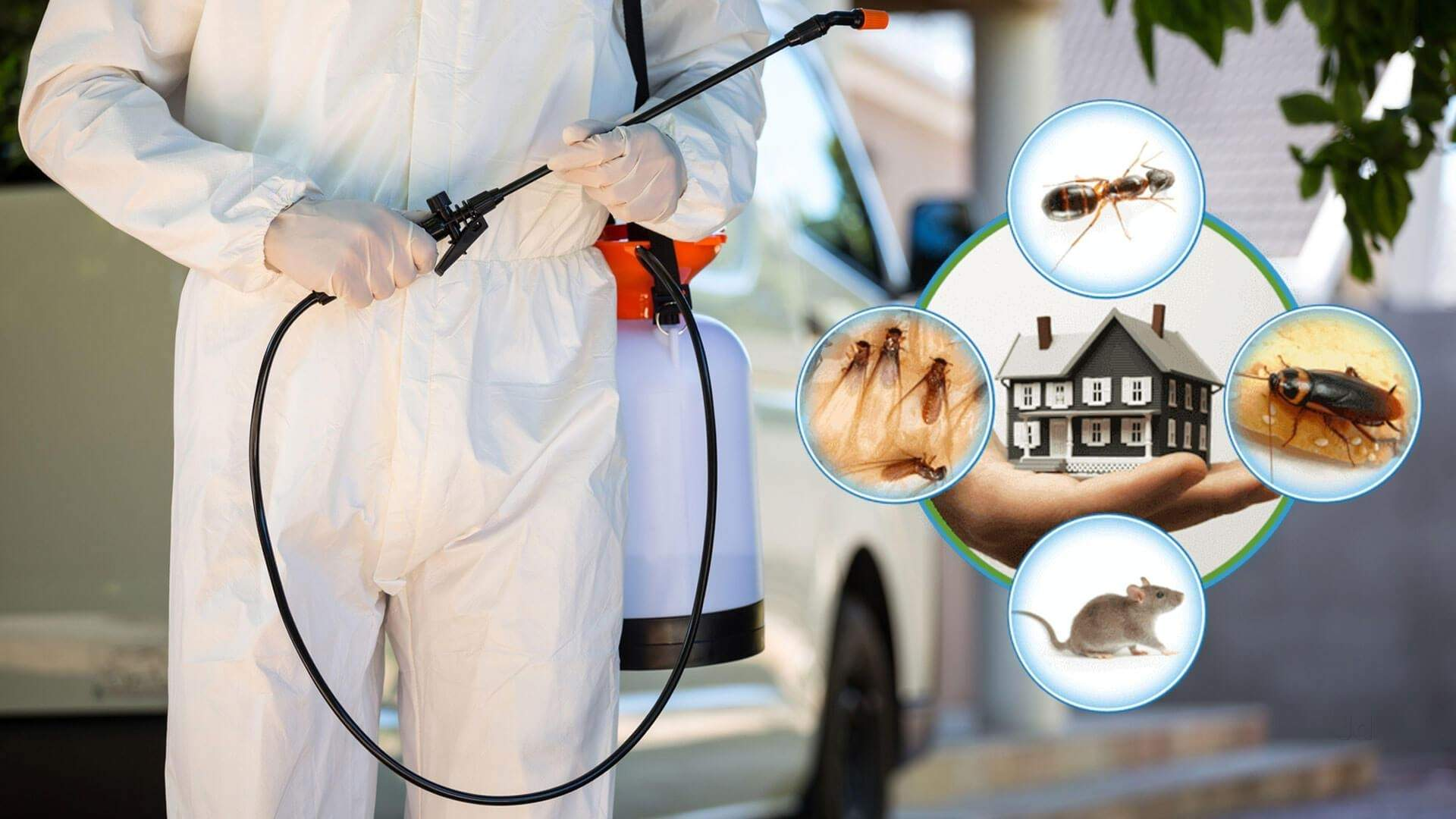 pest control services in pune pimpri chinchwad